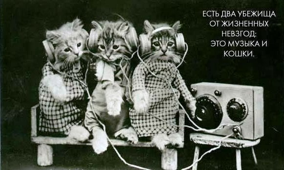 Два убежища от жизненных невзгод:  музыка и кошки